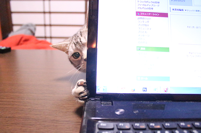 blog_0002122.jpg