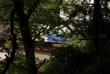 木の間越しに電車を見る