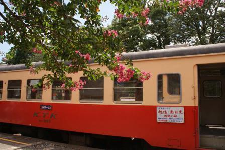 サルスベリと小湊鉄道