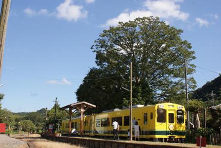線路際の大きな木