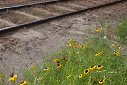 晩夏の小湊鉄道線路際の花
