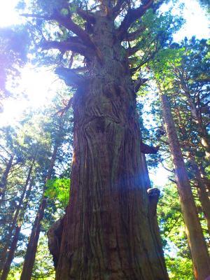 樹_convert_20121002080230
