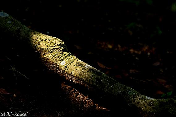 木の根・木漏れ日