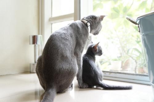 momo&kitten1
