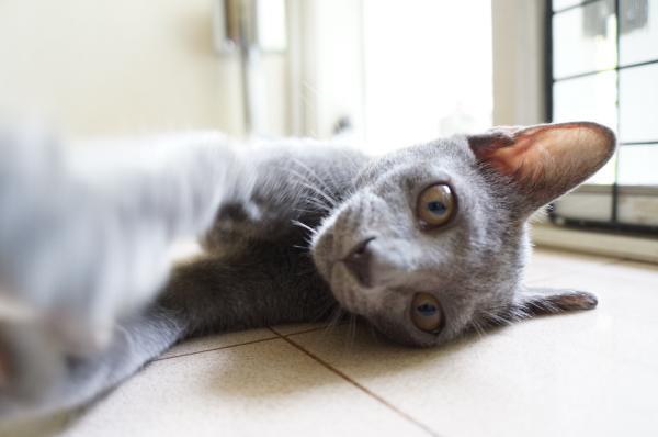 kitten10