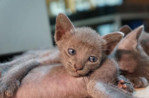 kitten7