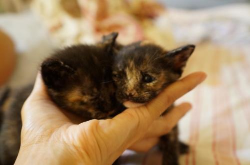 kitten12