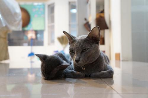 momo&kitten3