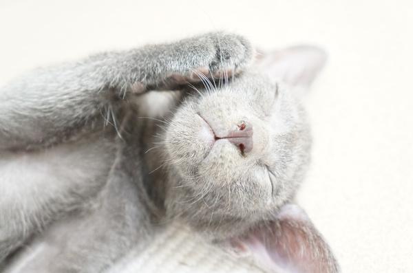 kitten3