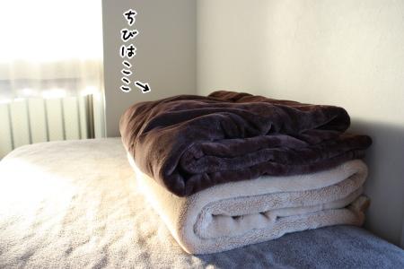 毛布をダブルで