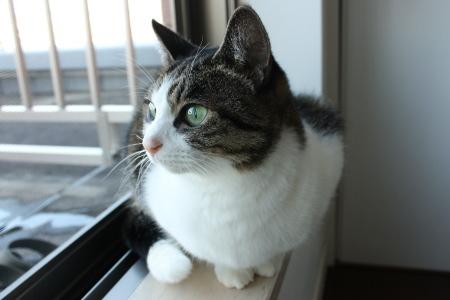 窓際のジェリーさん