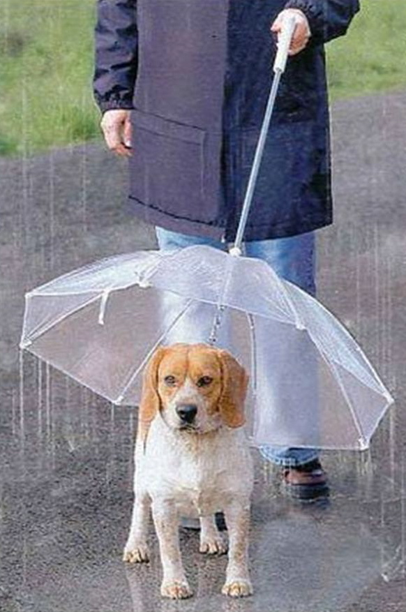 Cool-Unusual-Products-Dog-Leash-Umbrella.jpg