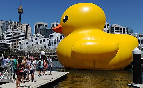 duck7.jpg