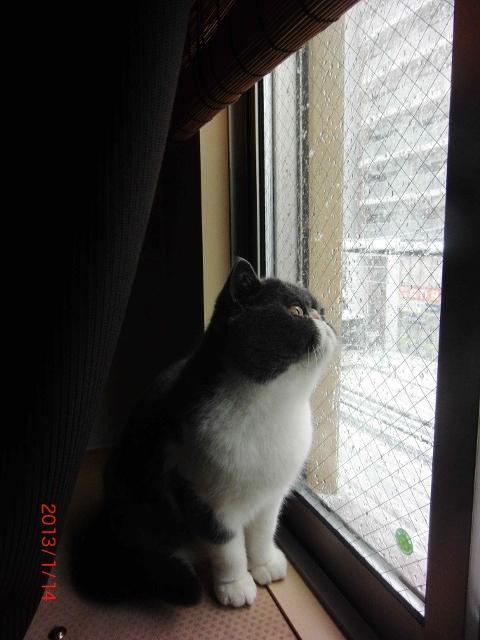 初雪3 (480x640)