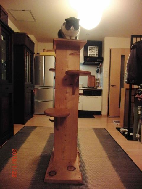 木製ネコタワー2 (480x640)