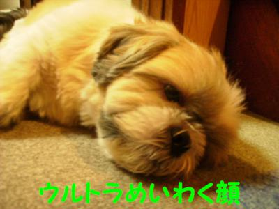 P9132464.jpg