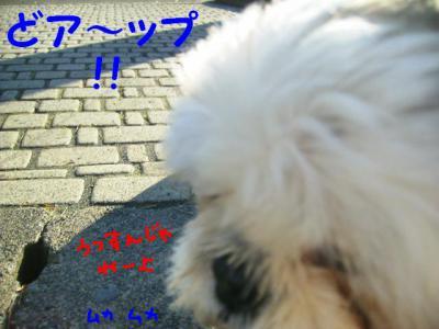 PC052599.jpg