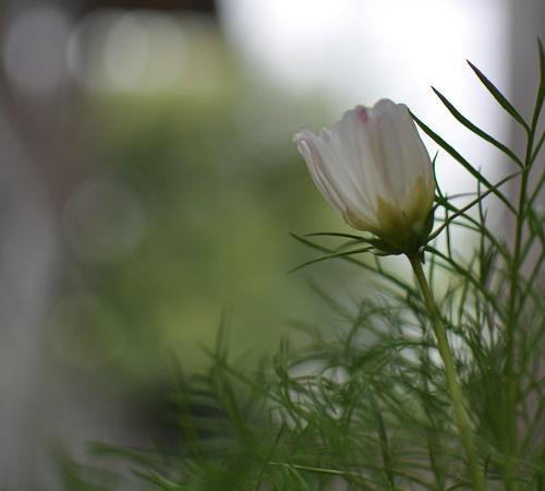 13さんぽDSC_0046