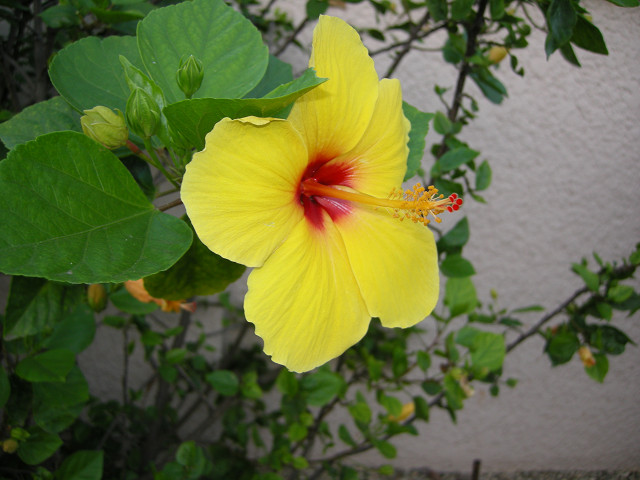 hawaii 08 064s