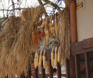 iwadeyama+soba+03_convert_20120604182652.jpg