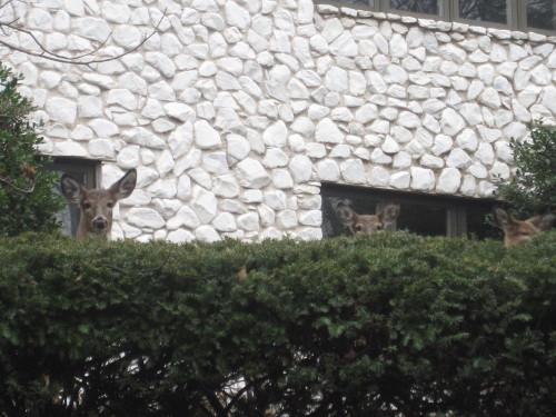 鹿ビーム2