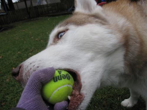ボール噛み
