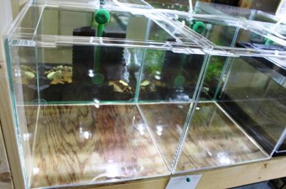 アクリル水槽1