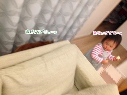 嵐丸 2014.11.21-2