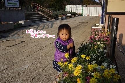嵐丸 2014.11.27-3