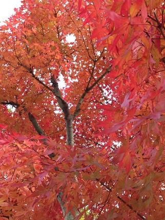 嵐丸 2014.11.27-8