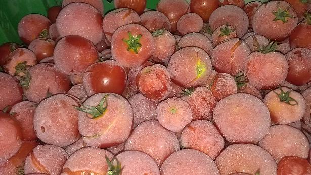 tomato_20130208000212.jpg