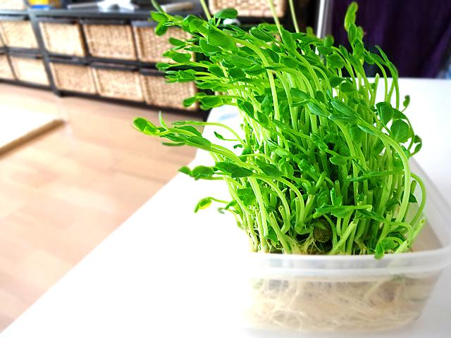green_20120526101917.jpg