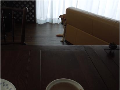 雑種犬は見た