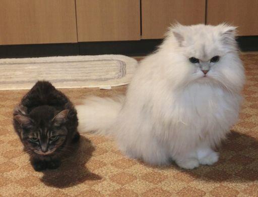 fluffy&yutaka 11