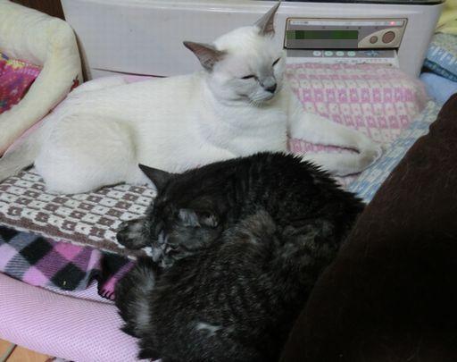 fluffy&miu 48