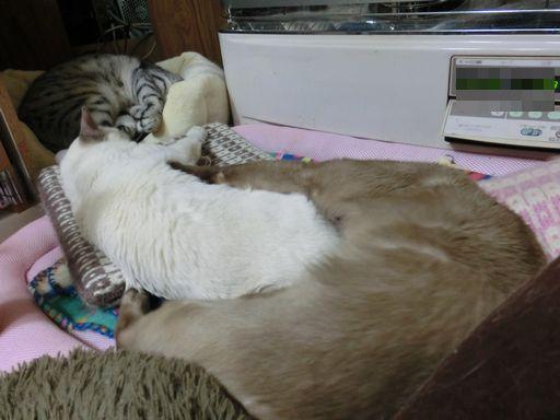hikaru&miu&rayleigh 25