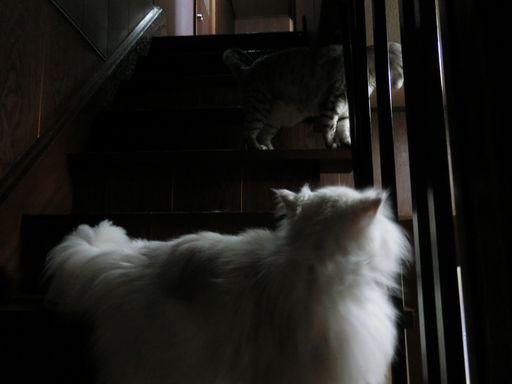 yutaka&rayleigh 18