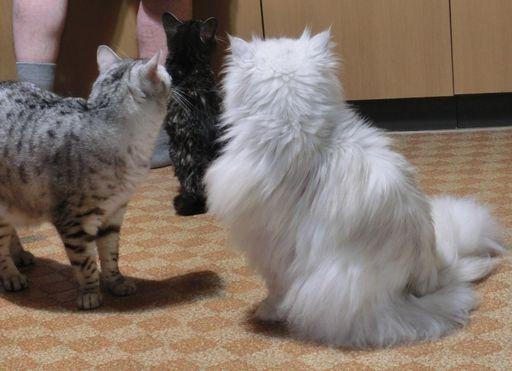 fluffy&yutaka&rayleigh 2