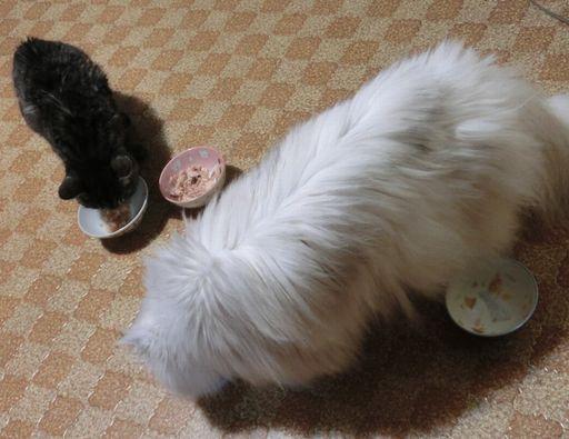 fluffy&yutaka 13
