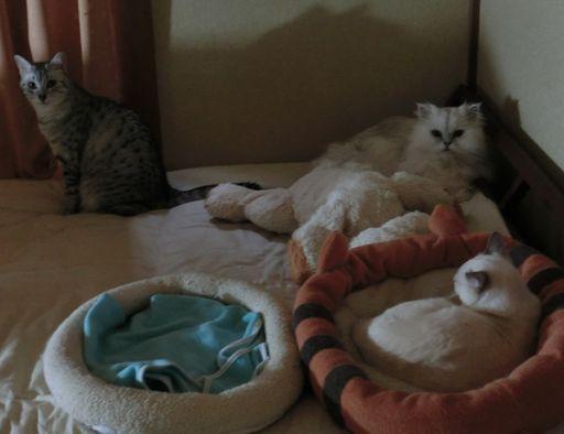 yutaka&miu&rayleigh 9