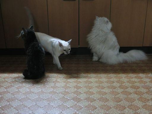 fluffy&yutaka&miu 2