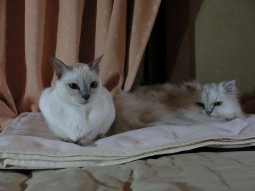 yutaka&miu 60