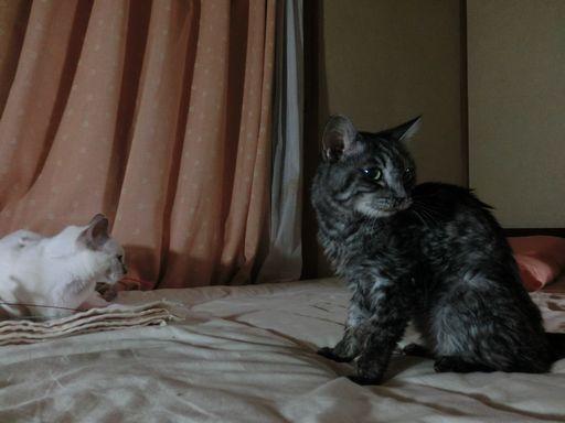 fluffy&miu 51