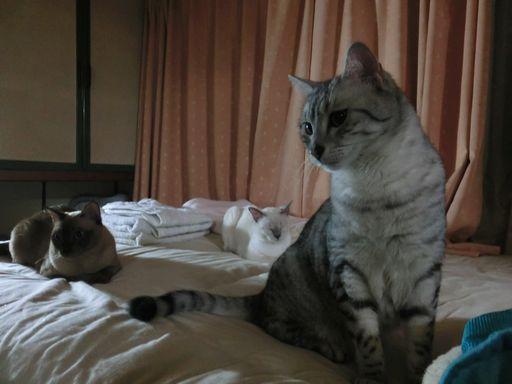 hikaru&miu&rayleigh 29