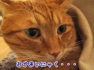 IMG_2299_20130122143720.jpg