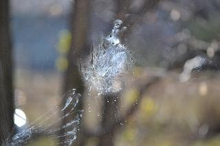 窓ガラス粉綿羽