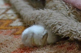 2014115モグの足