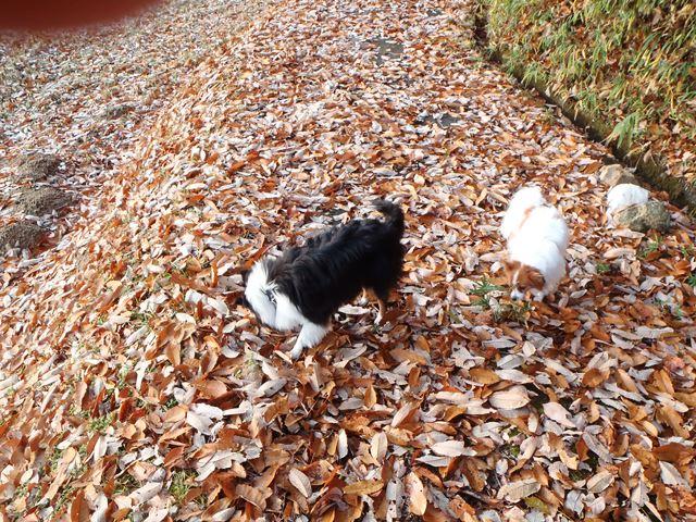 落ち葉の散歩道20141130
