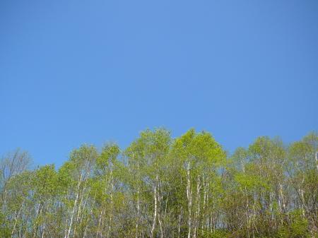 青空に新緑の緑が映える。