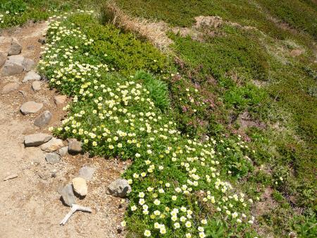 上ホロへの登山道はお花がお出迎え!